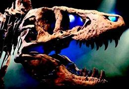 Недостающие кости скелета Тираннозавра T-REX возобновили посредством 3D печати